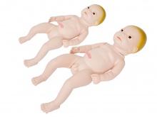 高级新生儿附脐带模型