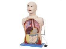 鼻胃插管及口腔护理模型人