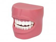 口腔清洁操作模型(带脸颊)