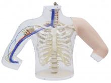 高级上臂肌肉注射及对比模型(带检测警示系统)