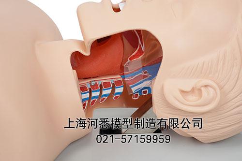 气管插管模拟人